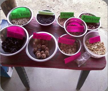 Actividad de reconocimiento de la importancia de frutos secos en San José del Magdalena